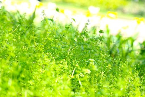 葉 緑  新緑 新芽 日本  自然 植物 屋外 壁紙 背景 背景素材 バックグラウンド 光  環境 エコ  さわやか 爽やか 初夏 若葉 草 草原 雑草