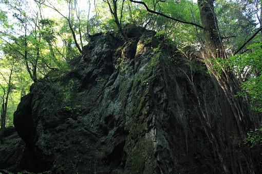 植物 樹 木 樹木 緑 自然 屋外 風景 景色 沢山 群生 葉っぱ 葉 茂る 生い茂る 生える 森 林 山道 岩 大きい 苔 根っこ 岩肌 幹