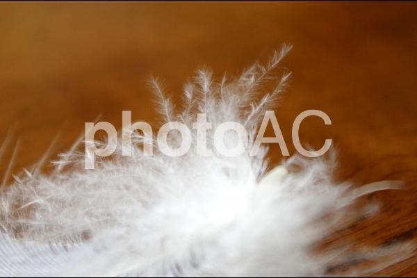 羽毛の写真