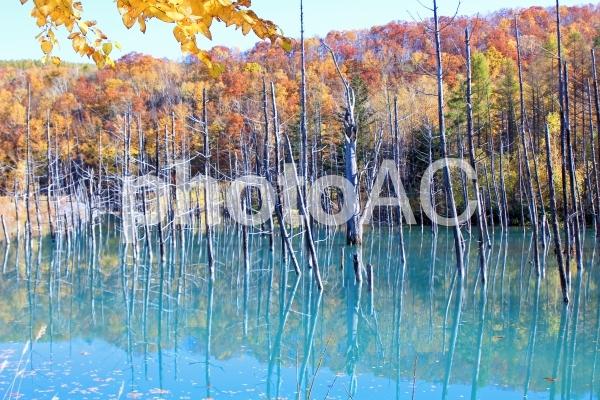青い池の写真