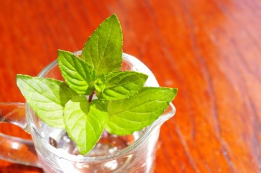 ペパーミント ミント ハーブ 西洋薄荷 セイヨウハッカ 葉 緑 香り 植物 シソ科 ガラス ミルクピッチャー