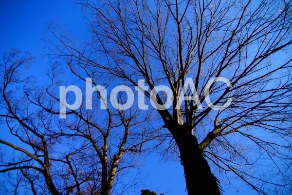 冬の木の写真