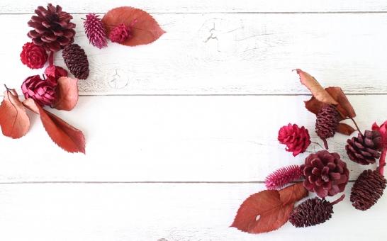 秋冬 木の実イメージ2の写真