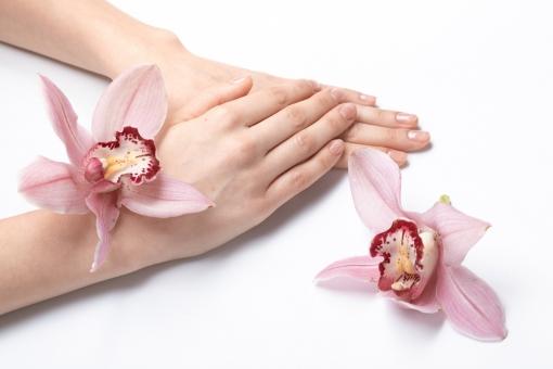 女性 女 おんな 女子 花 フラワー ラン 蘭 洋ラン 植物 花びら 花弁 ピンク 桃色 赤 レッド 手 両手 手首 手の甲 素手 素肌 置く 重ねる 添える ハンドポーズ ポーズ ハンドパーツ パーツ 白バック 白背景