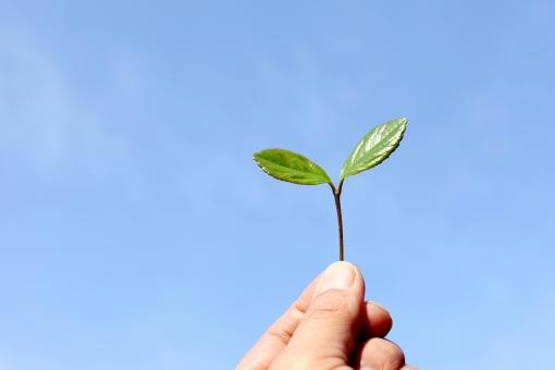 葉っぱ 葉 枝 木 自然 植物 新緑 青色 快晴 晴れ 天気 若葉 若い 新芽 芽 コピースペース スペース 余白 空間 屋外 成長 発育 発芽 風景 春 双葉 二葉 ふた葉 青 アップ 小枝 明るい 初夏 フレッシュ グリーン 緑色 緑 爽やか さわやか ネイチャー 発達 イメージ 2枚 シンプル 持つ 摘む 手 指 親指 人差し指 ボディーパーツ 新鮮