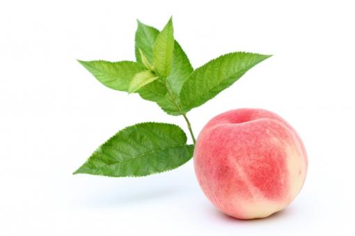 桃 もも ピーチ 果物 フルーツ モモ 果実 実 新鮮 食べ物 食材 デザート 甘い スイーツ フレッシュ 夏 季節 完熟 収穫 ピンク色 赤 赤色 一つ 1個 枝 木 小枝 葉 葉っぱ 緑色 コピースペース 余白 アップ クローズアップ 白バック 白背景 スタジオ スタジオ撮影 ピンク