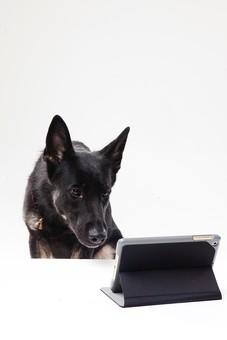 ポーズ 動物 生物 生き物 哺乳類 ほ乳類 犬 いぬ イヌ ドッグ シェパード 黒 タブレット ipad iphone スマホ スマートホン スマートフォン 見る 動画 テレビ電話 お座り おすわり 白背景 白バック グレーバック 十二支 干支 戌