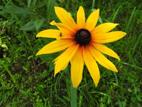 花 夏の花 黄色い花 黄色 植物 夏 初夏 7月 田舎 いなか 材料 素材 背景 風景 自然 横
