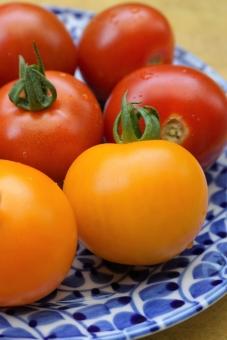 自然 環境 植物 とまと トマト なす科植物 ナス科植物 リコピン ミニトマト 収穫 ハーベスト 初夏 赤い色 オレンジ色 家庭菜園 農業 陶器 磁器 器 皿 有田焼 染付 唐草模様 ビタミンカラー 食べ物 野菜 夏野菜 フルーツ