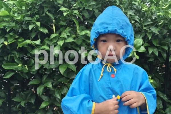 雨の中佇む子供の写真