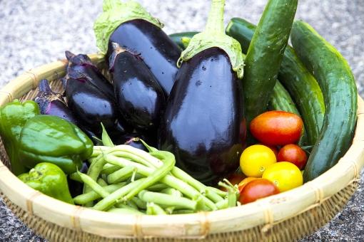 野菜 夏野菜 籠盛り かごもり 野菜集合 ザル ナス なす 茄子 米なす  新鮮 食材 ミニトマト 美味しい  新鮮な トマト キュウリ きゅうり さやいんげん サヤインゲン インゲンマメ インゲン ピーマン とまと ヘルシー フレッシュ 自然  ベジタブル 採れたて 健康