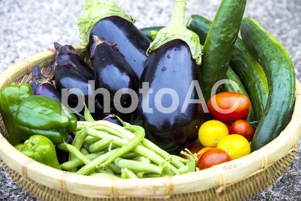 採れたて夏野菜の写真