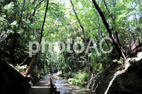 等々力渓谷の写真