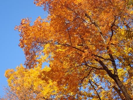 黄金色の秋の写真
