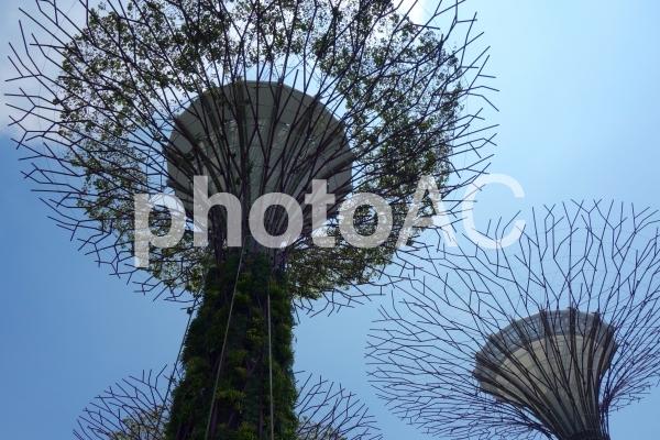 シンガポール ガーデンズバイザベイ スーパーツリーグローブの写真