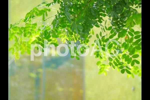 街中の街路樹の写真
