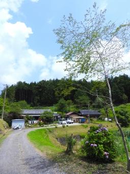 田舎 田舎の夏 夏 いなか 地方 初夏 夏空 夏色 木立 木 長い 空 雲 背景 素材 材料 自然 7月 8月 縦 スペース 余白 植物 風景 家 住宅 路 道 家屋 屋外 外 はれ 晴れ 晴天