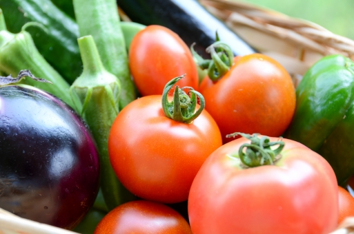 夏野菜 野菜 トマト 茄子 オクラ ピーマン 胡瓜 キュウリ きゅうり ミニトマト 盛り合わせ 収穫 有機栽培 オーガニック 家庭菜園 夏 カゴ バスケット 新鮮