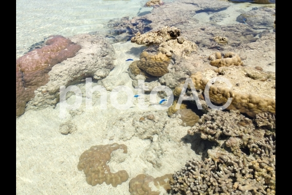 珊瑚とカラフルな小魚の写真