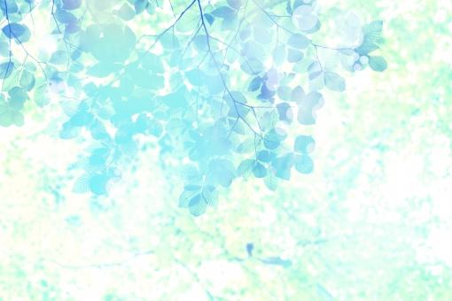 緑 グリーン 新緑 林 山毛欅 ブナ林 山毛欅林 ぶなの木 樹木 自然 春 早春 初夏 夏 里山 癒し リラクゼーション 木 木の葉 木漏れ日 マイナスイオン キラメキ きらめき キラキラ 輝き 木漏れ日 光 背景 テクスチャー 壁紙
