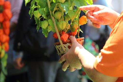 植物 赤 朱色 縁日 お祭り おまつり 夏祭り 風 和風 日本 ほおずき市 ほおずき 風鈴 夏 涼 手 男性 指先