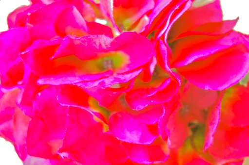 花 フラワー 造花 イミテーション イミテーションフラワー フェイク フェイクフラワー 鮮やか 彩度 赤 赤い