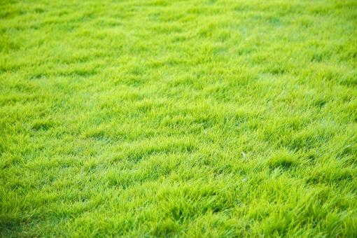 一面の草原の写真