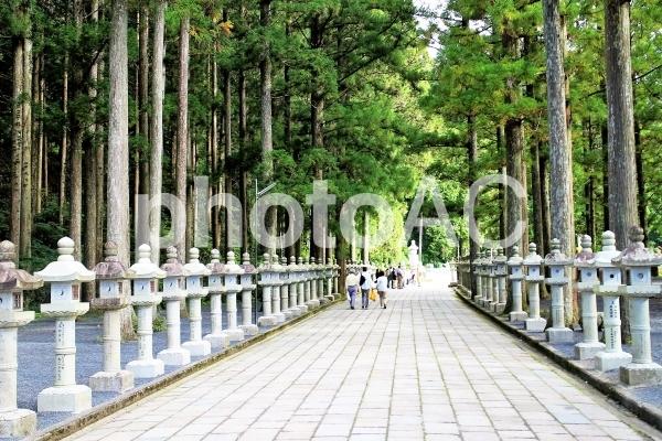 高野山参道の写真