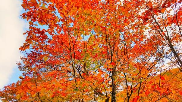 北海道の紅葉33の写真