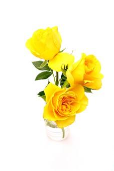 父の日 イベント プレゼント ギフト 行事  花 フラワー 生花 バラ ばら 薔薇 明るい さわやか 爽やか   黄色  6月 六月  贈る 3本 白 白バック