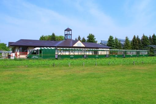 周遊列車 公園 リリートレイン 札幌 百合が原公園 北海道 列車 鉄道 緑 青空 新緑
