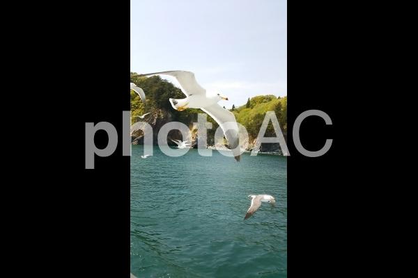 カモメと空3の写真