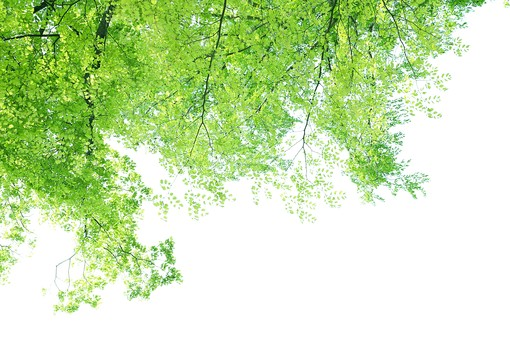 葉 緑 木 新緑 新芽 日本 木の葉 自然 植物 屋外 壁紙 背景 背景素材 バックグラウンド 光 青空 環境 エコ 木漏れ日 こもれび 枝 さわやか 爽やか 初夏 若葉