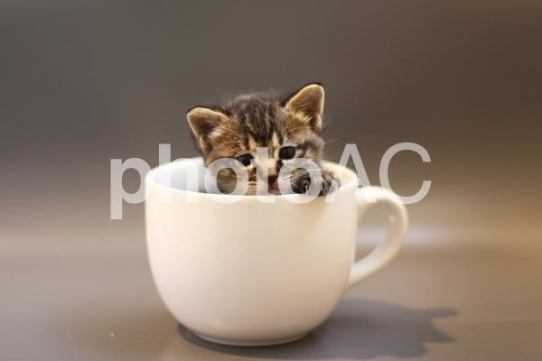 マグカップの子猫の写真