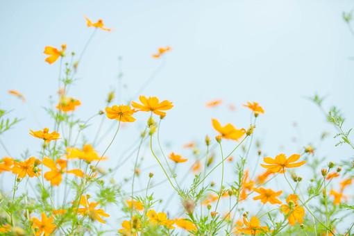 自然 風景 景色 環境 スナップ 旅行 散歩 公園 森林 緑 日光 季節 葉っぱ 植物 美しい きれい シルエット 癒し 青い 草花 野草 栽培 のどか  優しい 保養 花 黄色い花