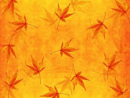 モミジ もみじ 紅葉 椛 かえで カエデ 楓 葉 植物 自然 秋 余白 背景 背景素材 バックグラウンド テキストスペース コピースペース 暖色 空間 質感 テクスチャ 赤色 赤 季節 散らばる 散る 散布 透ける 透かし 半透明 オレンジ 金 黄金 黄色 加工 写真加工