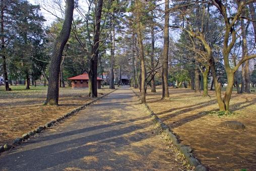 東京都 小金井 公園 冬 風景