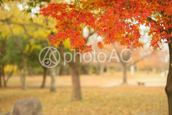 秋の風景10の写真