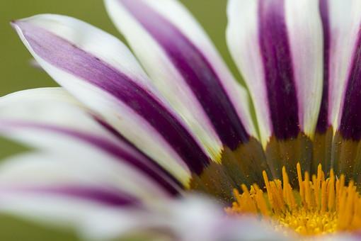 自然 風景 環境 植物 花 草花 観葉 手入れ 栽培 世話 水やり 植える 育てる ベランダ 庭 林 公園 花壇 癒し 咲く 開花 成長 土 観察 アップ 近い 紫