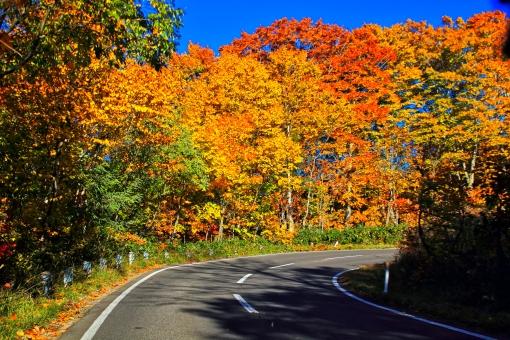 紅葉の道をドライブの写真
