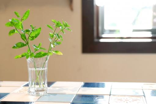 家の中のグリーンの写真