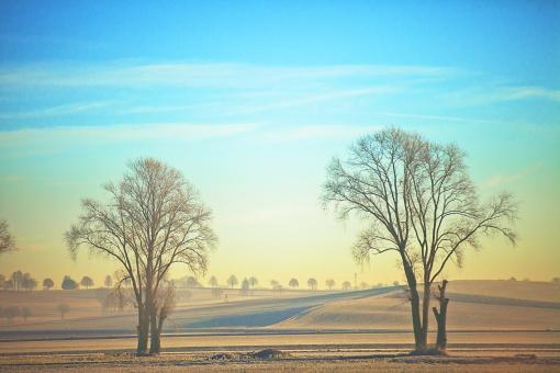 外国 外国風景 海外 海外風景 ヨーロッパ 欧州 ドイツ 景色 風景 景観 環境 自然 植物 樹木 郊外 田舎 秋 冬 のどか 静寂 白やけ 霧 ガス 農村 道 田舎道
