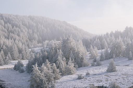 冬の風景 山 やま 冬 風景 景色 雪 雪山 雪国 ゆき 雪景色 冬化粧 銀世界 白銀 寒冷 寒い 雪原 降雪 白 純白 パウダースノー スノー 天気 自然 大自然 大地 木 樹木 植物 空