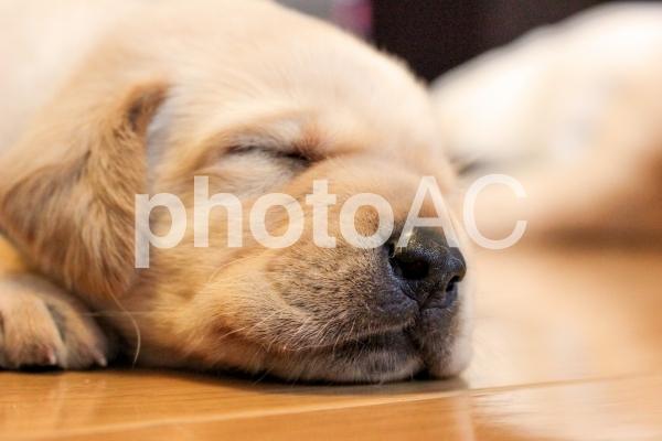 おねむな子犬3の写真