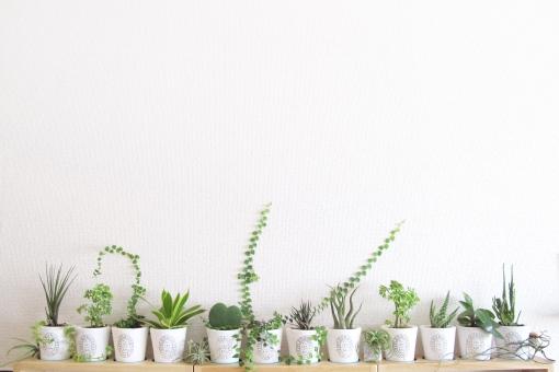 ミニ観葉植物インテリアの写真