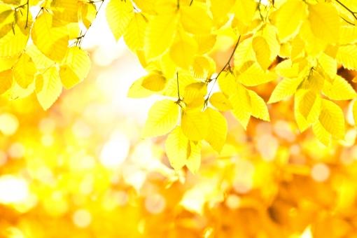 秋の森_1の写真