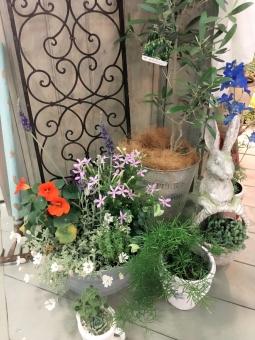植物 自然 お花 草花 ポット 春 夏 デッキ アイアン アンティーク