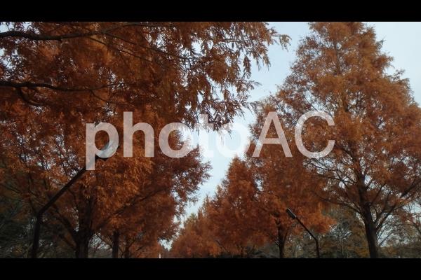 紅葉がきれいな公園の写真