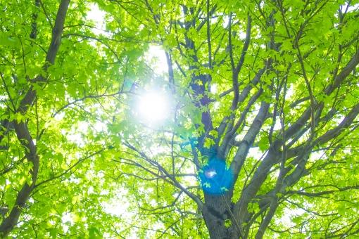 木漏れ日 太陽 光 日差し 木 木々 森林 森林浴 緑 グリーン 爽やか 空気 マイナスイオン 明るい 柔らかい 暖かい 昼寝 木陰 差し込む 葉っぱ 生い茂る 新緑 芽生え 春 小春日和 初夏夏 黄緑 自然 ヒーリング 散歩 atohs