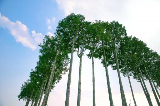 直角に並ぶ樹木の写真